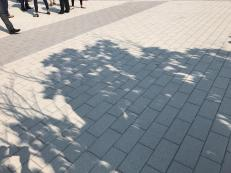 Tree leafs cast crescent shadows