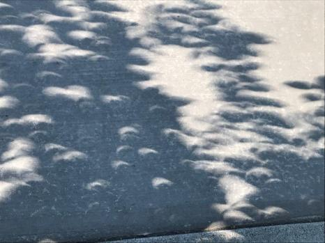 Crescent-shaped shadows from trees